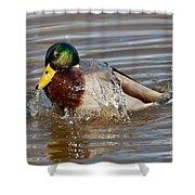 Mallard Drake Bathing Shower Curtain