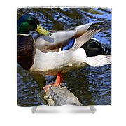 Mallard Drake Shower Curtain