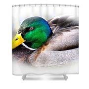 Mallard Drake Shower Curtain