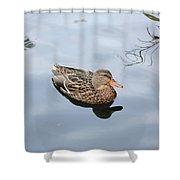 Mallard Duck Smile Shower Curtain