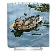 Solitaire Mallard Duck Shower Curtain