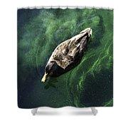 Mallard Duck On Green Pool Shower Curtain