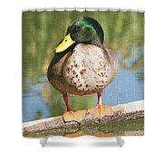 Mallard Duck On Log Shower Curtain