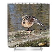 Mallard Duck Stretch  Shower Curtain