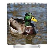 Mallard Duck Watches Shower Curtain
