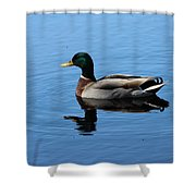Mallard Duck With Reflection On The Water Shower Curtain
