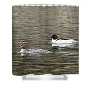 Mallard Ducks   #8479 Shower Curtain