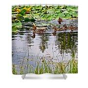 Mallard Ducks In Heron Pond In Grand Teton National Park-wyoming  Shower Curtain