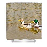 Mallard Ducks Pair Shower Curtain