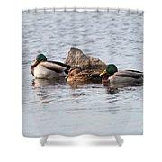 Mallard Ducks Sleeping Shower Curtain