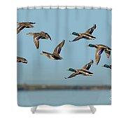 Mallard Flock Flying Shower Curtain