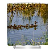 Mallard Hen And Ducklings Shower Curtain
