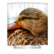 Mallard Hen Close Up Shower Curtain