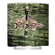 Mallard Hen With Ducklings And Reflection Shower Curtain