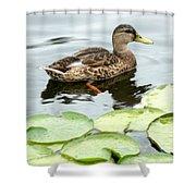 Mallard Lilly Pad Shower Curtain