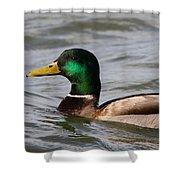 Mallard On The Lake Shower Curtain