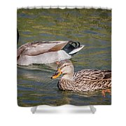 Mallard Pair Shower Curtain