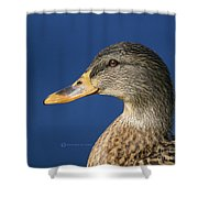 Mallard Queen Shower Curtain