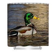 Mallard Square Format Shower Curtain