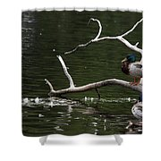 Mallard Standing Post Shower Curtain