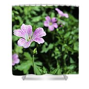 Mallow Cheeses Shower Curtain