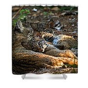 Mama And Her Babies  Shower Curtain
