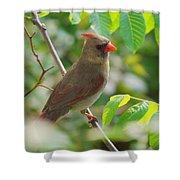 Mama Cardinal Shower Curtain