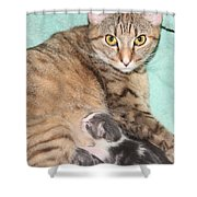 Mama Cat And Her Kittens Shower Curtain