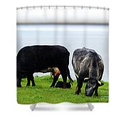 Mama Daddy And Baby Shower Curtain