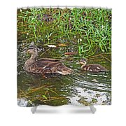 Mama Duck And Baby Shower Curtain