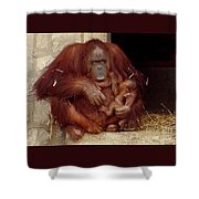 Mama N Baby Orangutan - 54 Shower Curtain