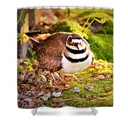 Mama Protecting Eggs Shower Curtain