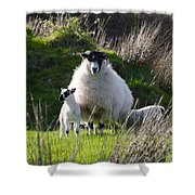 Mama Sheep And Her Two Lambs Shower Curtain