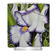 Mama's Favorite Iris Shower Curtain