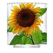 Mammoth Sunflower Shower Curtain