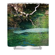 Manatee N Pup Shower Curtain