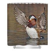 Mandarin Duck Flapping Away Shower Curtain