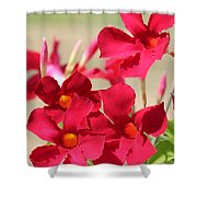 Mandevilla Named Sun Parasol Crimson Shower Curtain