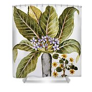 Mandrake And Buttercup Shower Curtain