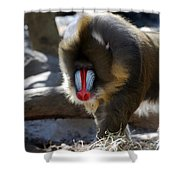 Mandrill Monkey Shower Curtain