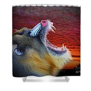 Mandrill Roaring At The End Of A Day  Shower Curtain