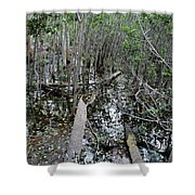Mangrove 001 Shower Curtain