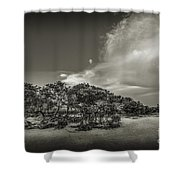 Mangrove At Low Tide Shower Curtain