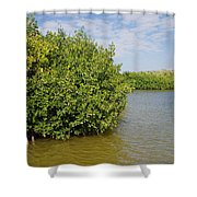 Mangrove Fores Shower Curtain by Carol Ailles