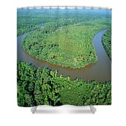 Mangrove Forest In Mahakam Delta Shower Curtain