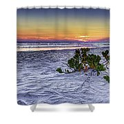 Mangrove On The Beach Shower Curtain