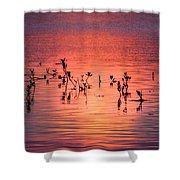 Mangrove Paradise Shower Curtain