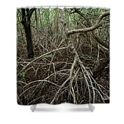 Mangrove Roots 2 Shower Curtain