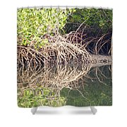 Mangroves In The Gambia Shower Curtain