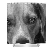 Man's Best Friend In Black And White Shower Curtain